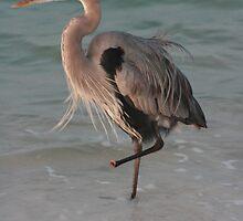 Great Blue Heron Amputee by eangelina64