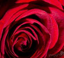 Red Rose by pramodmeee