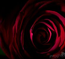 Red Rose - Valentines day - love by pramodmeee