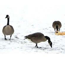 Canadian Geese in NYC Photographic Print