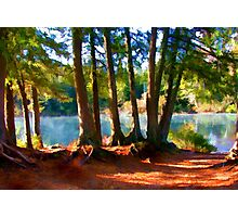 Path to the Lake Through the Woods Photographic Print