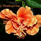 Orange hibiscus thanksgiving by  B. Randi Bailey