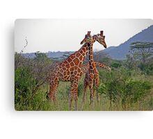 Necking - Giraffes Canvas Print