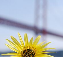 Daisy and April 25th bridge by luissantos84