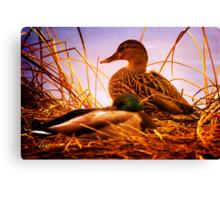 Ducks in the Rough Canvas Print