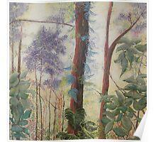 Daintree Forest Queensland Australia Poster