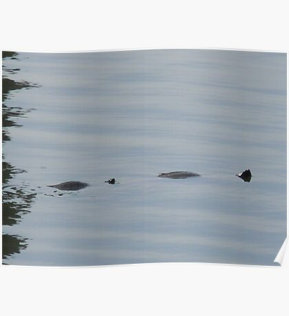 Not Loch Ness  Poster
