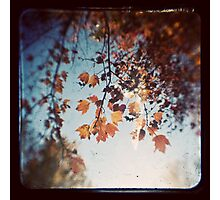 Autumn Ttv Photographic Print
