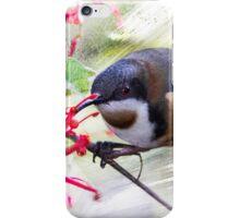 Eastern Spinebill Brush strokes iPhone Case/Skin
