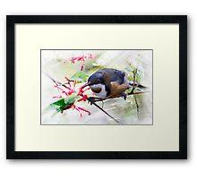 Eastern Spinebill Brush strokes Framed Print