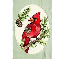 Male Cardinal and Branches Photographic Print