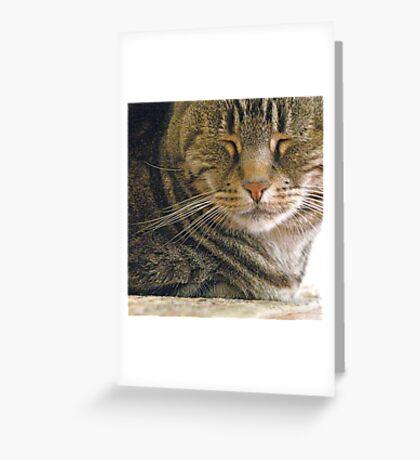 Feline Zen Greeting Card
