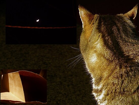 Cat, Moon, Paper Bag by Jane Underwood