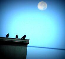 Blue Moon by vintagedaisy