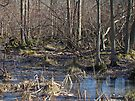 The Not-So-Dismal Swamp by MotherNature