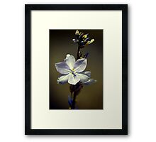 A Touch Of Blue.... Framed Print
