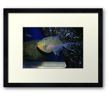 Electric Blue and Gold Framed Print