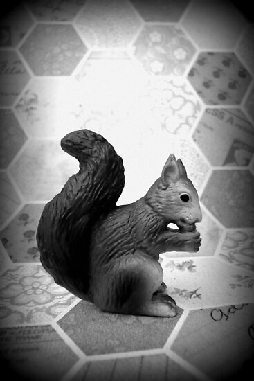 Squirrel by Shara