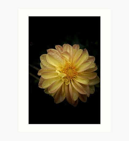 Yellow with a touch of tan Art Print