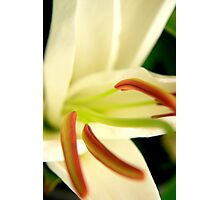 Lily - Colour Photographic Print
