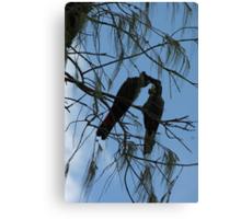 Black Cockatoos Preening Canvas Print