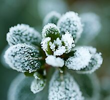Reaching to the Frost by Gillian Cross