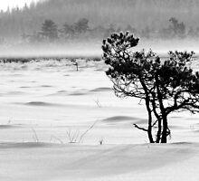 24.1.2012: Pine Tree, Winter Day III by Petri Volanen