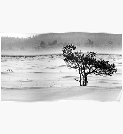24.1.2012: Pine Tree, Winter Day III Poster