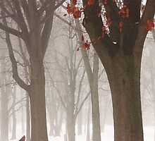 WINTER IN THE WOODS by TOM YORK