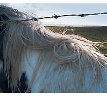 Horses mane and barbed wire Photographic Print