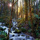 North Fork Beauty by Charles &amp; Patricia   Harkins ~ Picture Oregon