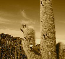 Prickly by closho