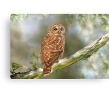 Owl Time Metal Print