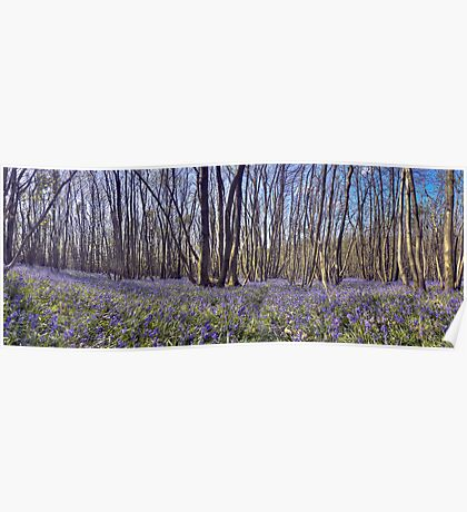 Kings Wood Bluebells Poster