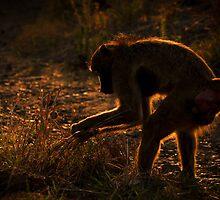 Baboon's Breakfast by Emma  Gilette
