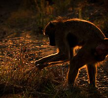 Baboon's Breakfast by Emma  Gilette