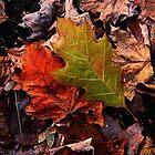 Foliage ! by Elfriede Fulda