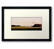 Sheep in the Afternoon Sun Framed Print