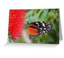 Hecale Longwing on Bottlebrush - Heliconius hecale zuleika Greeting Card
