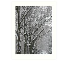 snow on trees Art Print