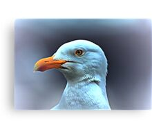 Portrait of a Herring Gull  Canvas Print