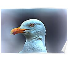 Portrait of a Herring Gull  Poster