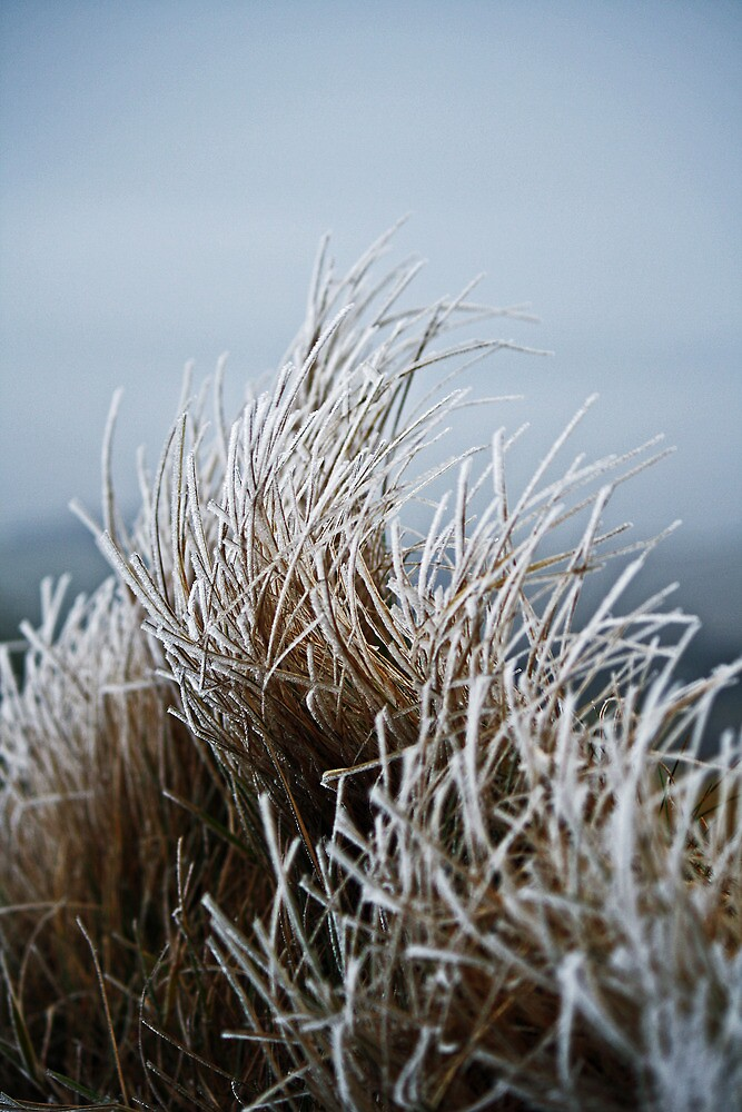 Frosted Grass by David Pringle