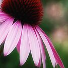 Echinacea iphone case  by Elaine  Manley