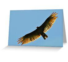 Turkey Buzzard 1 Greeting Card