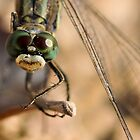 Dragonfly with an attitude by Sammy77