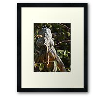 I'M The Royal - You Are A Human Being Framed Print