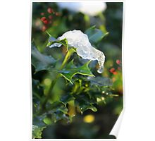 Holly leaf, snow, berries Poster
