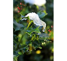 Holly leaf, snow, berries Photographic Print