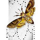 Death Head Moth by Paula Stirland